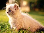 超萌小猫咪高清壁纸