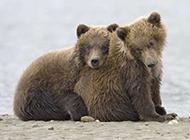 大自然的野生动物高清合集
