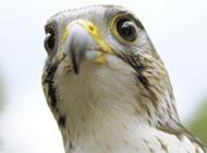 鹦鹉红雀野生鸟类高清组图