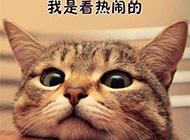搞笑动物文字配图精选图片
