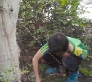父亲用铁链将10岁儿子锁树上 称不听话吓吓他