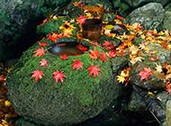 秋日悄然飘落的落叶图片