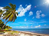好看唯美的海边椰林风景图片