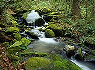 宁静唯美的溪流瀑布美景图片