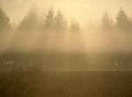 初晨山水间云雾环绕美景