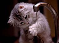 小动物搞笑图片之饭前洗手好习惯