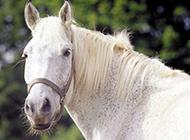 健壮骏马高清动物图片