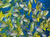 海葵蝙蝠鱼海底生物组图