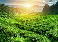 云南乡村绿色山川旖旎风景图片