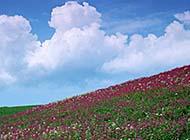 唯美花海花卉近拍美景