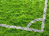 绿茵草地足球场场地图片