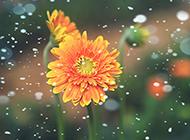 高清花朵唯美靓丽摄影