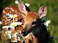 森林里卖萌的小鹿高清组图