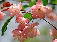 春天优美鲜花风景图片大全