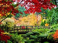 秋色宜人的公园拱桥图片