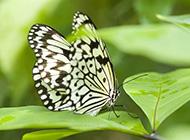 美丽的蝴蝶图片壁纸