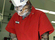 恶搞ps神图之猫咪厨师型男
