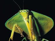 螳螂蚂蚁小昆虫镜头特写