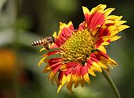 小蜜蜂图片春天公园美景摄影