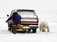 北极熊卖萌搞笑图片之看你往哪里跑