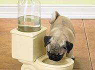 狗狗的搞笑图片之创意饮水机