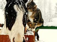 奇葩搞笑动物图片之亲吻