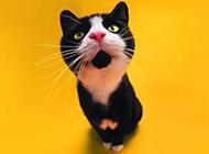 超级可爱小猫咪趣怪壁纸