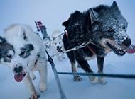 走进格陵兰极地巡逻队:严酷训练挑战极限