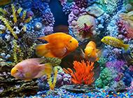 海底世界唯美风景图片壁纸