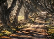 唯美树林四季风景高清壁纸