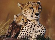 温暖有爱的大自然动物可爱图片壁纸