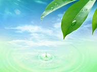 生机勃勃大自然绿叶精美壁纸