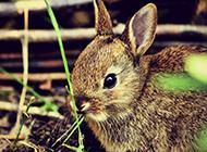 软萌调皮的可爱小兔子壁纸