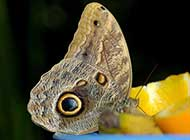 树林里的美丽蝴蝶精美高清摄影图集