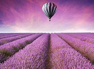 紫色薰衣草花海壁纸唯美浪漫
