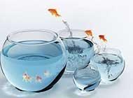 鱼缸里的金鱼桌面高清壁纸