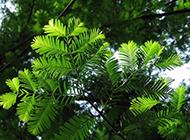 高清阳光养眼绿色梦境