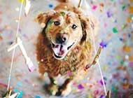 可爱的狗狗微笑唯美图片