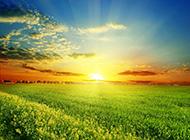 乡间绿油油的麦田风景图片