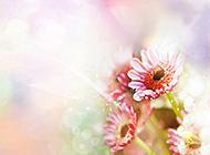 色彩艳丽的花儿唯美高清壁纸