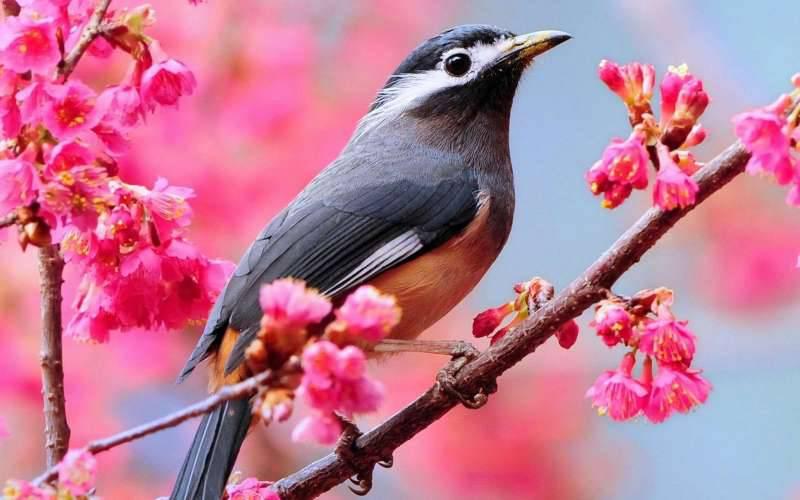 春天的鸟儿高清动物图片