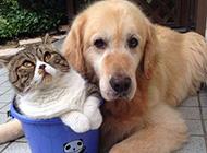 相亲相爱的狗狗与猫咪友爱瞬间