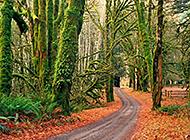 绿色花草树木护眼美景壁纸