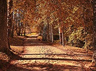 最新秋天唯美意境风景图片
