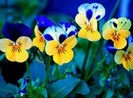小清新园艺花卉壁纸大全