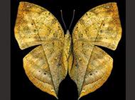 最美蝴蝶的图集