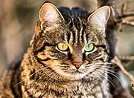 乖巧好奇的的小猫咪高清组图