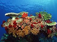 海洋世界精美鱼种高清风景赏析