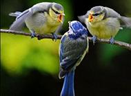 三只鸟必有电灯泡搞笑酷头像