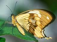 飞舞在花丛中的蝴蝶高清壁纸